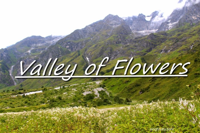 A trek into the blossoming Valley of Flowers!