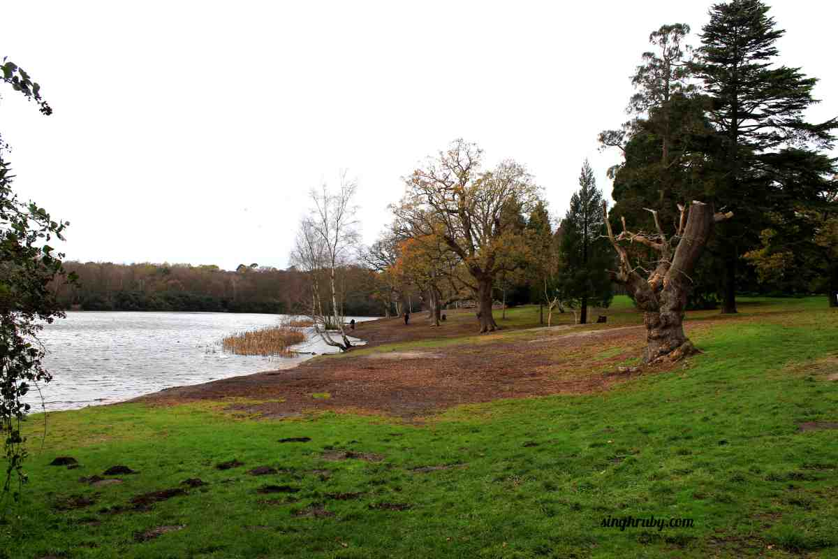 Lake at Windsor Great Park